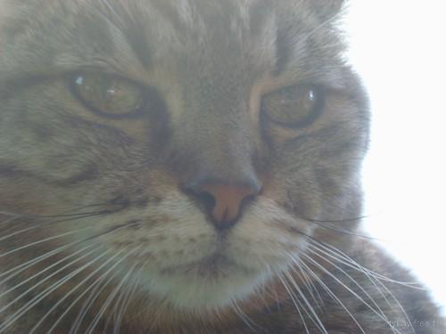 Pépita, plus connue sous le nom de ''pépète le chat''