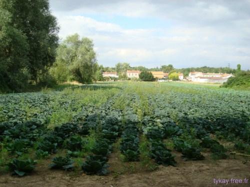 07juillet/angouleme_lea_land 2011 - DSC07858