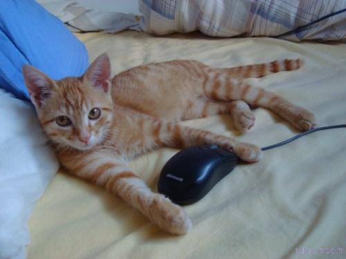 DSC08768 pti chat et souris logitech