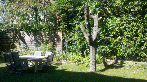 jardin cerisier couped