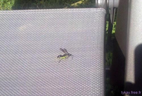 fourmi abeille sauterelle wtf