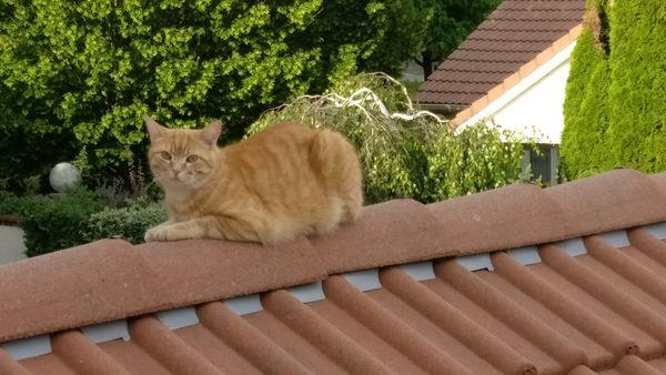 chat sur un toit brulant